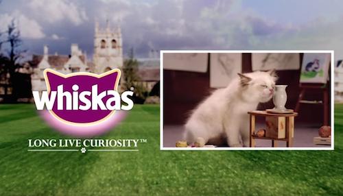 Whiskas-Kitten-Kollege-1